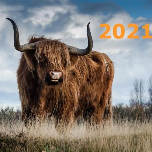 Прогноз на 2020 год металлического быка